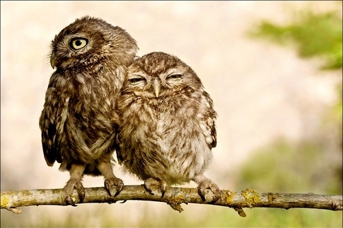 owls-hugging