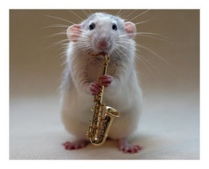 mouse-saxaphone-funny-animals